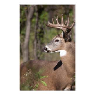 White Tail Ten Point Buck Stationery