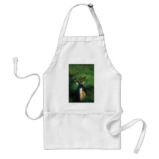 White-tailed Buck Adult Apron