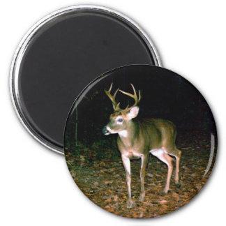 White-tailed Buck Deer Magnet