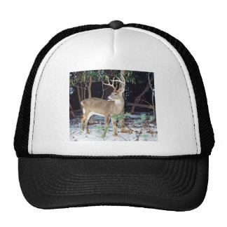 White Tailed Buck Hat