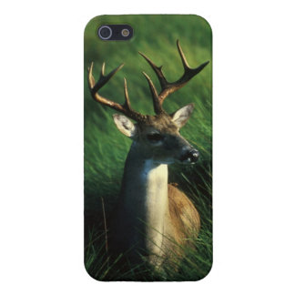 White-Tailed Buck iPhone Cover iPhone 5/5S Case