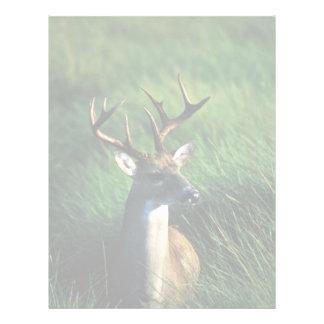 White-tailed Buck Letterhead