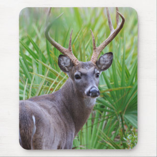 White-tailed Buck Mouse Pad