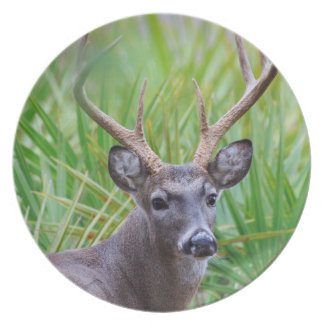 White-tailed Buck Party Plates