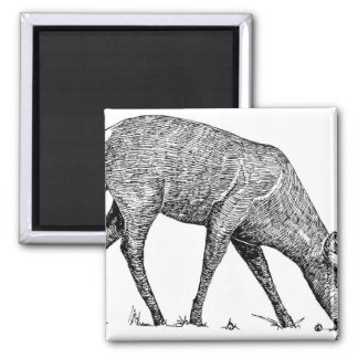 White-Tailed Deer 2 Inch Square Magnet