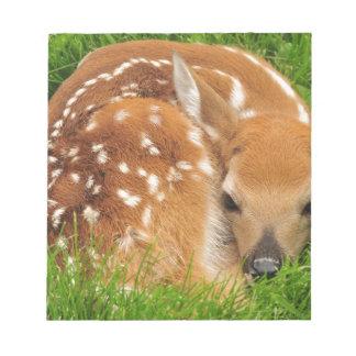 white-tailed-deer-934gahr notepad