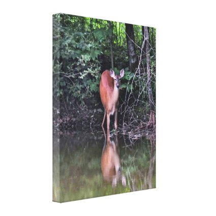 White Tailed Deer at Forest Pond Canvas Print