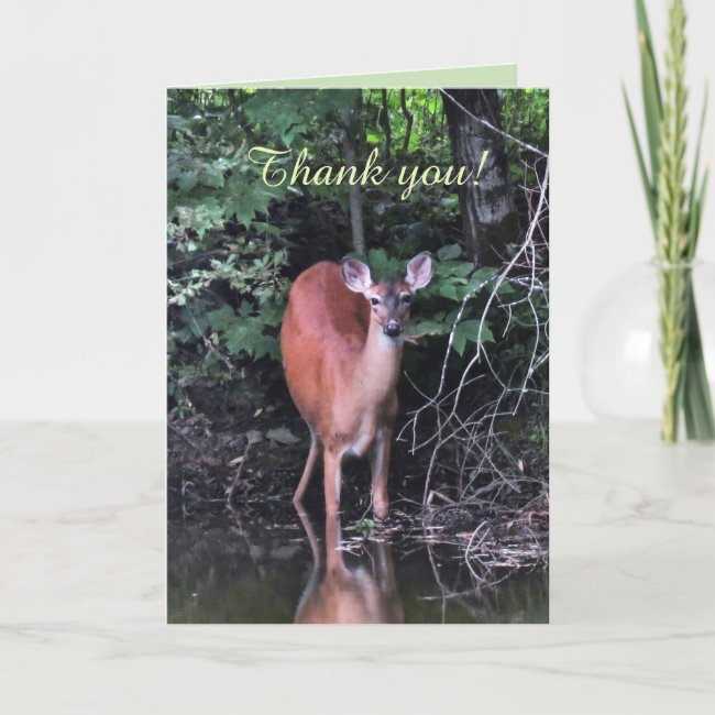 White-tailed Deer at Forest Pond Thank You Card