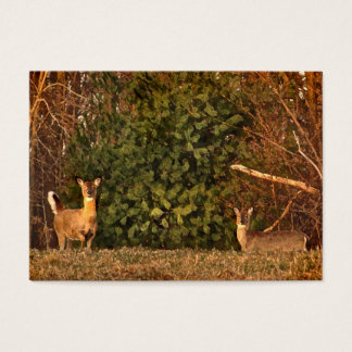 White-tailed Deer at Sunrise ATC Business Card