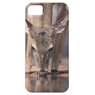 White tailed deer at waterhole iPhone 5 covers