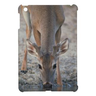 White-tailed Deer Buck in Velvet Drinking Water iPad Mini Cover