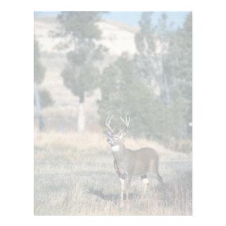 White-tailed deer buck letterhead