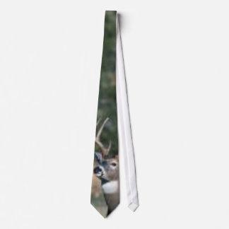 White-tailed deer buck tie