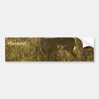 White-tailed deer bumper stickers
