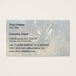 White-tailed Deer Business Card