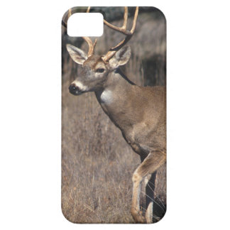 White-Tailed Deer - Case-Mate iPhone 5 Cover