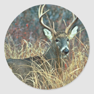 White-tailed Deer Classic Round Sticker