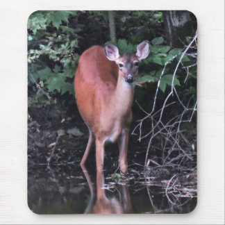White Tailed Deer Drinking at Forest Pond Mousepad
