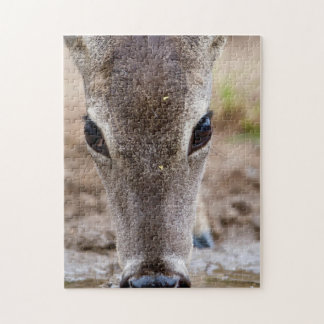 White-tailed Deer drinking water Puzzle