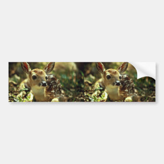White-tailed Deer Fawn Bumper Sticker