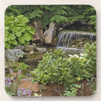 White-tailed deer fawn hiding in backyard drink coaster