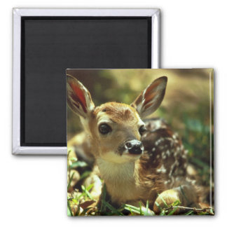 White-tailed Deer Fawn Magnet