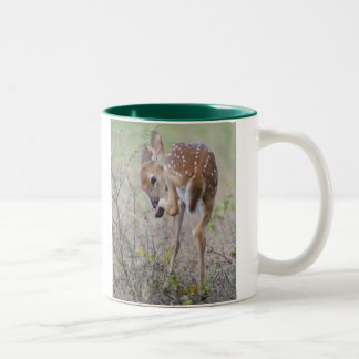 White-tailed Deer Fawn Two-Tone Coffee Mug