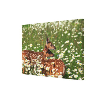 White-tailed deer fawns canvas print