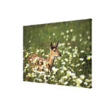 White-tailed deer in field of flowers , stretched canvas print