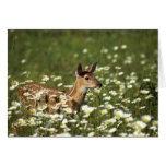 White-tailed deer in field of flowers , greeting card