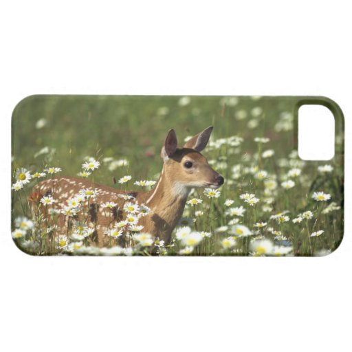 White-tailed deer in field of flowers , iPhone 5 case