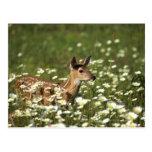 White-tailed deer in field of flowers , postcard