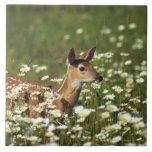 White-tailed deer in field of flowers , ceramic tile