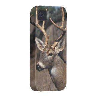 White-Tailed Deer - iPhone 4 Cover