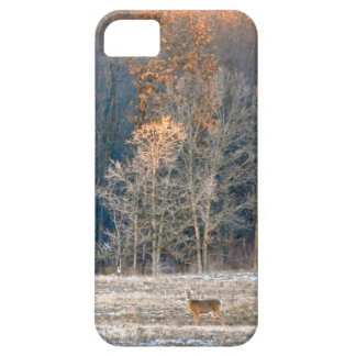 White Tailed Deer iPhone 5 Case