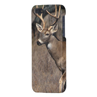 White-Tailed Deer - iPhone 5 Savvy Case