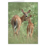 White-tailed deer mother and fawn greeting card