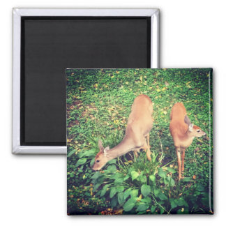 White-tailed Deer Nature Photography Magnet