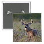 white-tailed deer Odocoileus virginianus) 2 2 Inch Square Button