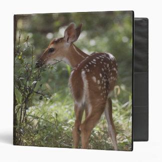 White-tailed Deer, Odocoileus virginianus, 2 3 Ring Binder