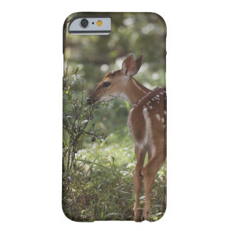 White-tailed Deer, Odocoileus virginianus, 2 Barely There iPhone 6 Case