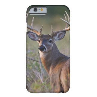white-tailed deer Odocoileus virginianus) 2 Barely There iPhone 6 Case