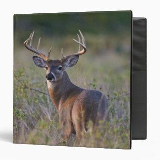 white-tailed deer Odocoileus virginianus 2 Vinyl Binders