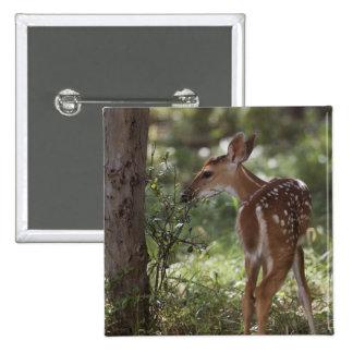 White-tailed Deer, Odocoileus virginianus, 2 Button