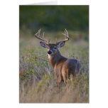 white-tailed deer Odocoileus virginianus) 2 Greeting Card