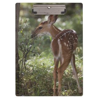 White-tailed Deer, Odocoileus virginianus, 2 Clipboard