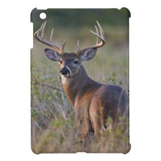 white-tailed deer Odocoileus virginianus) 2 iPad Mini Cases