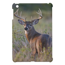 white-tailed deer Odocoileus virginianus) 2 iPad Mini Cover