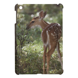 White-tailed Deer, Odocoileus virginianus, 2 iPad Mini Cover