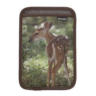 White-tailed Deer, Odocoileus virginianus, 2 iPad Mini Sleeve